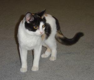 Luna, age 8 months
